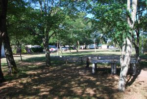 camping ombragé bassin d'arcachon